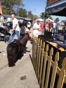 Most entertaining sight of the day???a pet pony at a food stand?